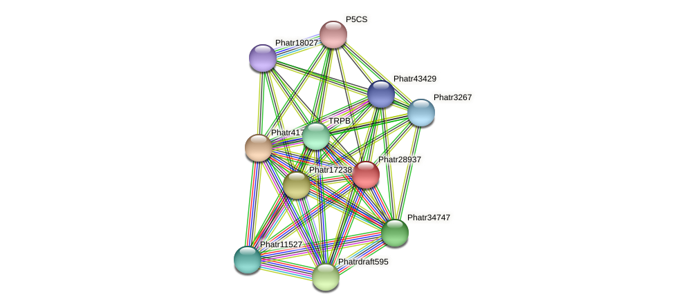 Phatr28937 protein (Phaeodactylum tricornutum) - STRING interaction network