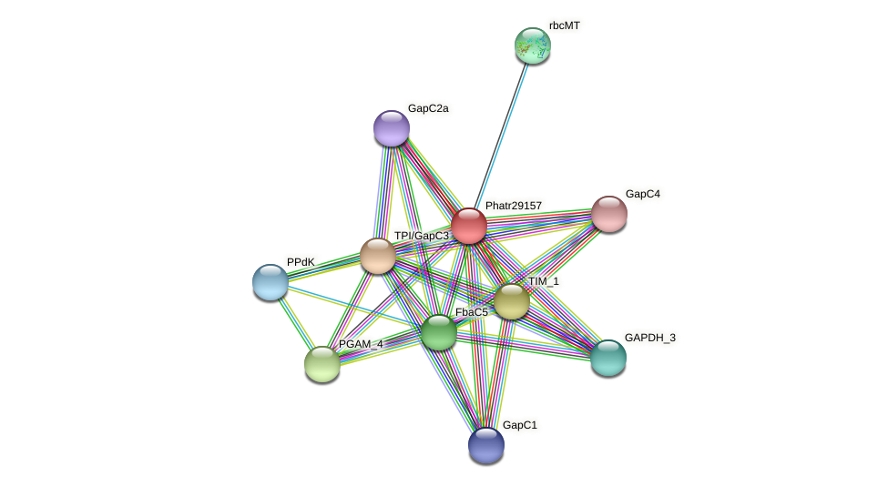 Phatr29157 protein (Phaeodactylum tricornutum) - STRING interaction network