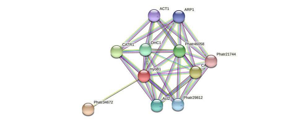 myoB1 protein (Phaeodactylum tricornutum) - STRING interaction network