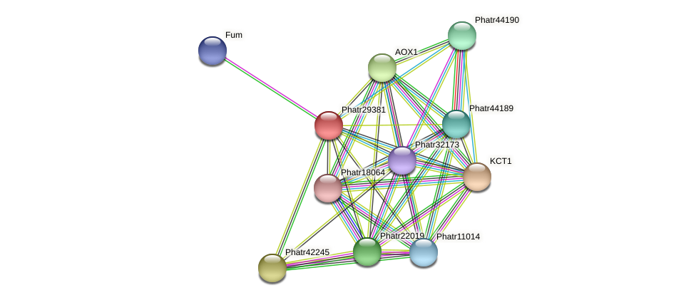 Phatr29381 protein (Phaeodactylum tricornutum) - STRING interaction network