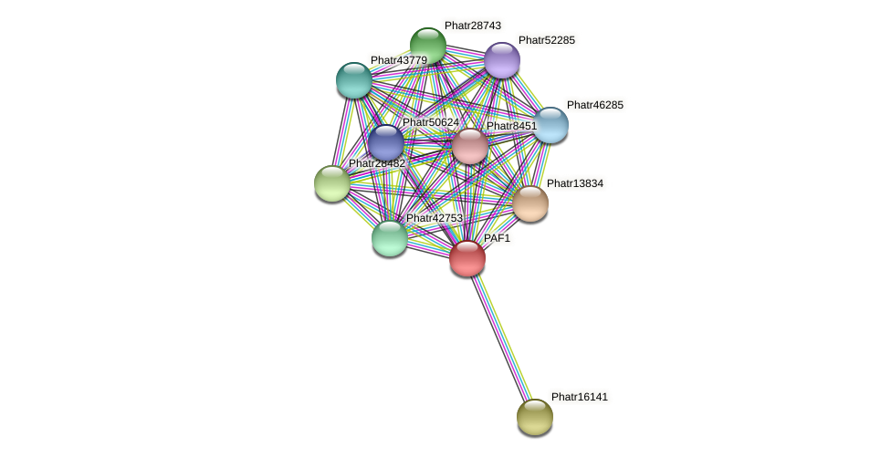 PAF1 protein (Phaeodactylum tricornutum) - STRING interaction network