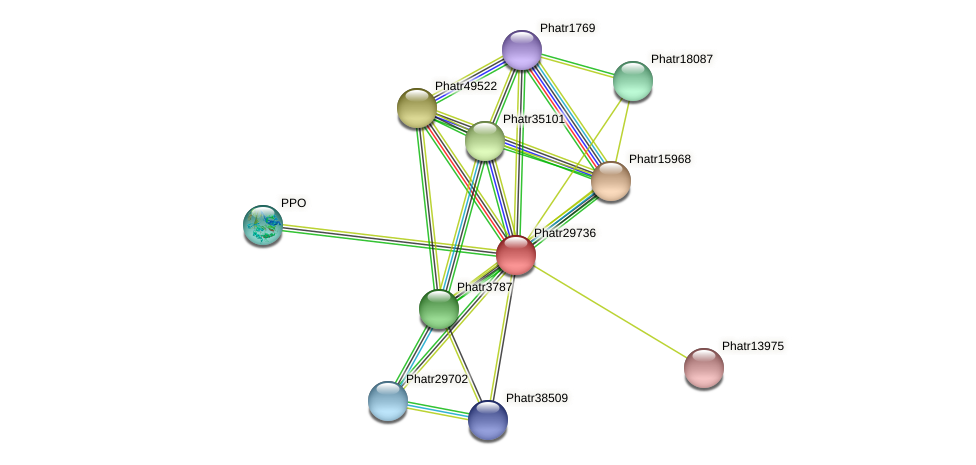 Phatr29736 protein (Phaeodactylum tricornutum) - STRING interaction network