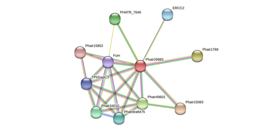 Phatr29983 protein (Phaeodactylum tricornutum) - STRING interaction network