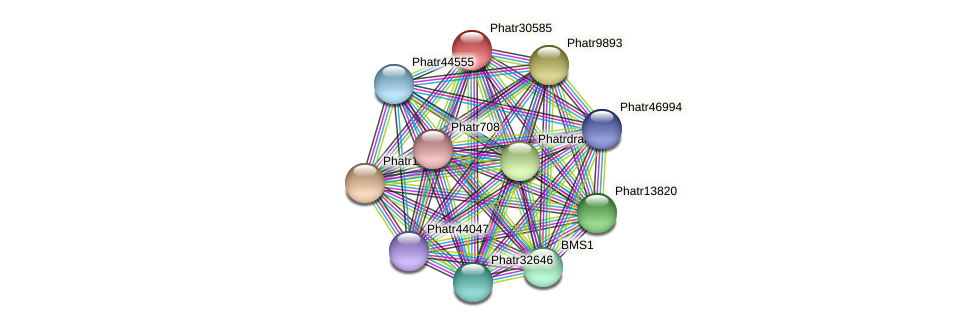 Phatr30585 protein (Phaeodactylum tricornutum) - STRING interaction network