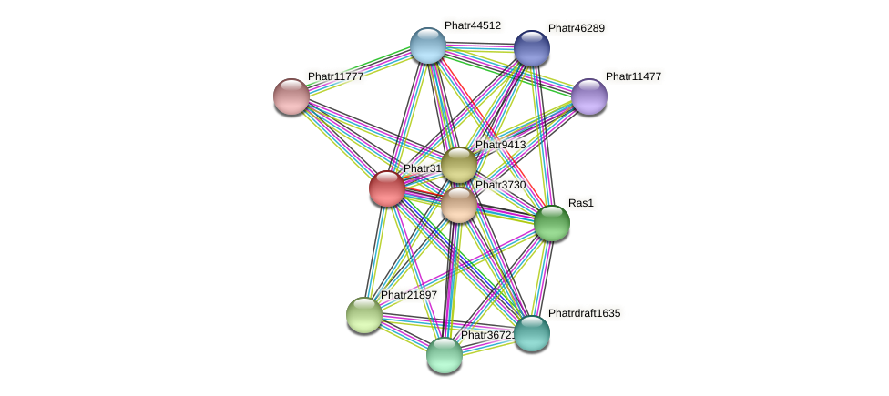 Phatr3120 protein (Phaeodactylum tricornutum) - STRING interaction network