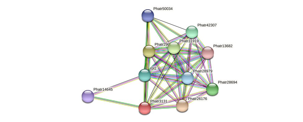 Phatr3131 protein (Phaeodactylum tricornutum) - STRING interaction network