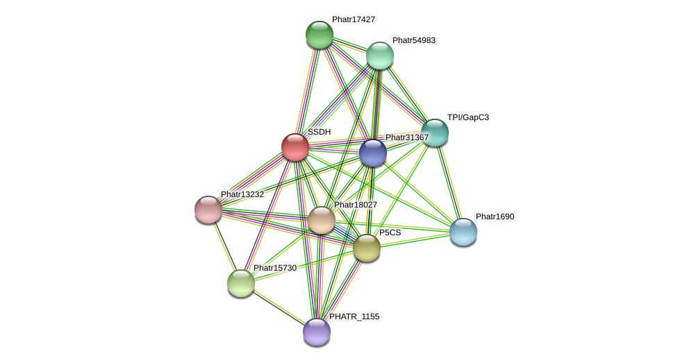 SSDH protein (Phaeodactylum tricornutum) - STRING interaction network