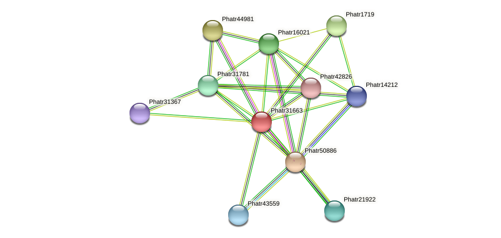 Phatr31663 protein (Phaeodactylum tricornutum) - STRING interaction network