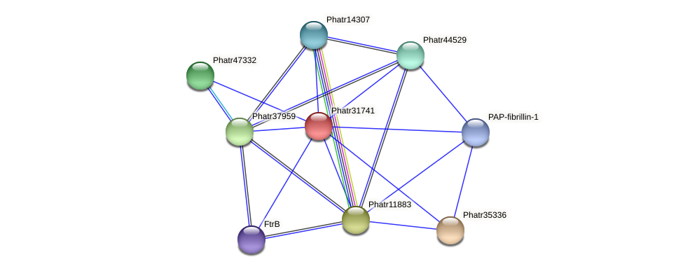Phatr31741 protein (Phaeodactylum tricornutum) - STRING interaction network