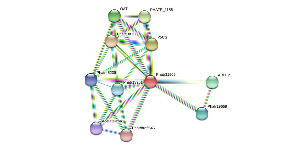 Phatr31906 protein (Phaeodactylum tricornutum) - STRING interaction network
