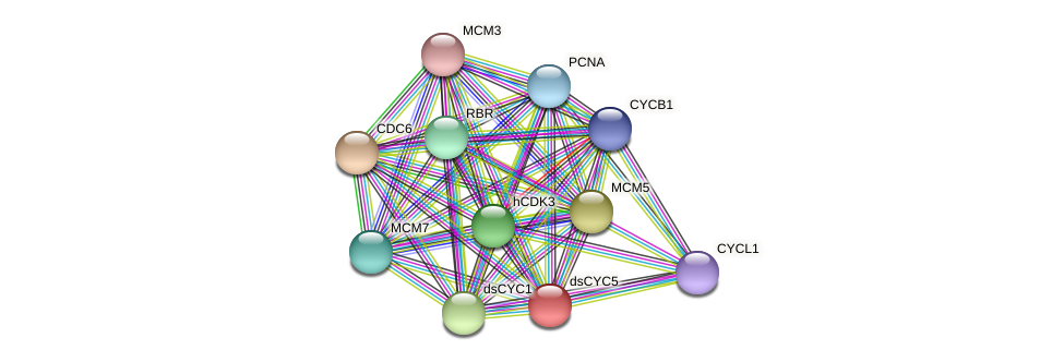 dsCYC5 protein (Phaeodactylum tricornutum) - STRING interaction network