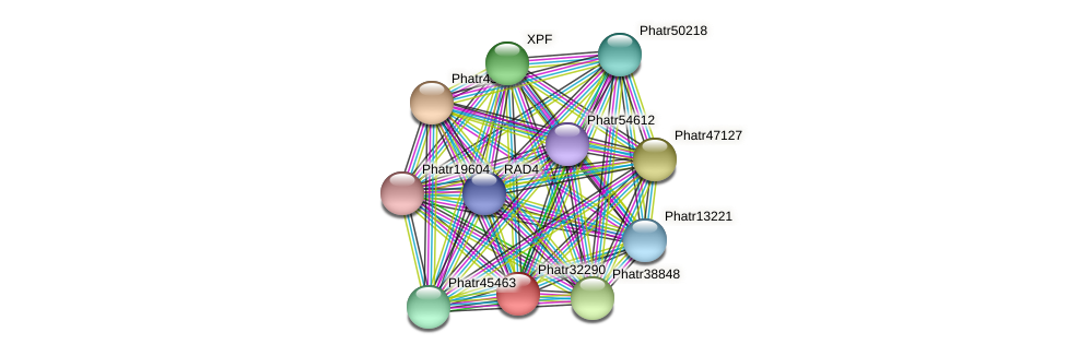 Phatr32290 protein (Phaeodactylum tricornutum) - STRING interaction network