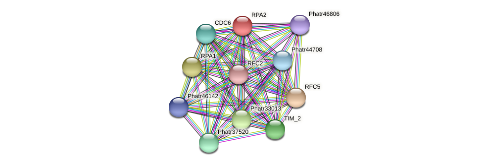RPA2 protein (Phaeodactylum tricornutum) - STRING interaction network