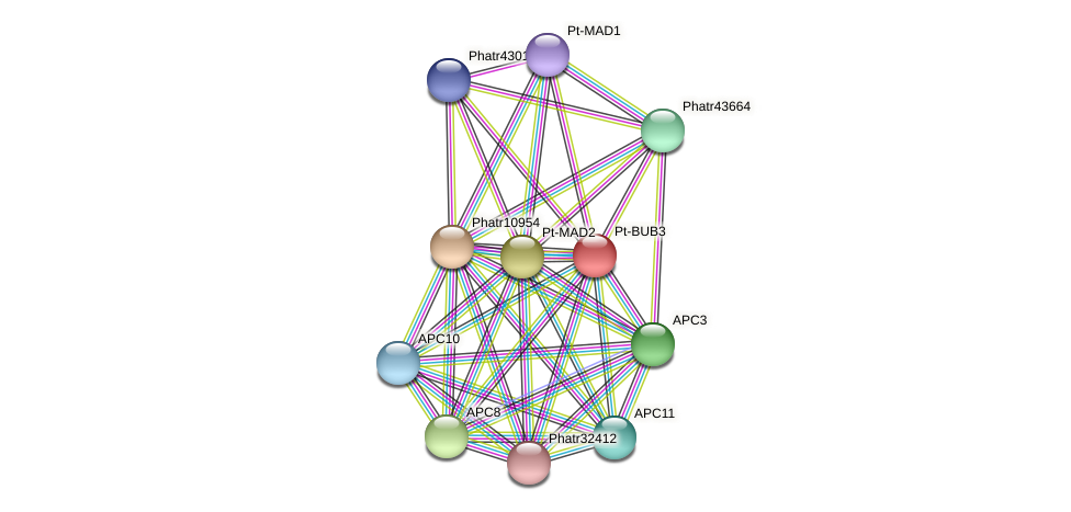 Pt-BUB3 protein (Phaeodactylum tricornutum) - STRING interaction network