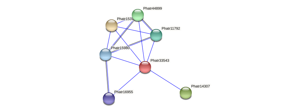 Phatr33543 protein (Phaeodactylum tricornutum) - STRING interaction network