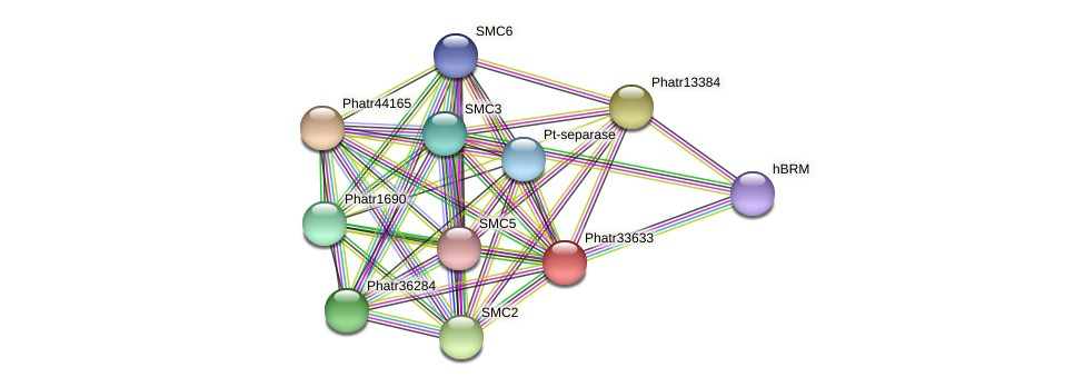 Phatr33633 protein (Phaeodactylum tricornutum) - STRING interaction network