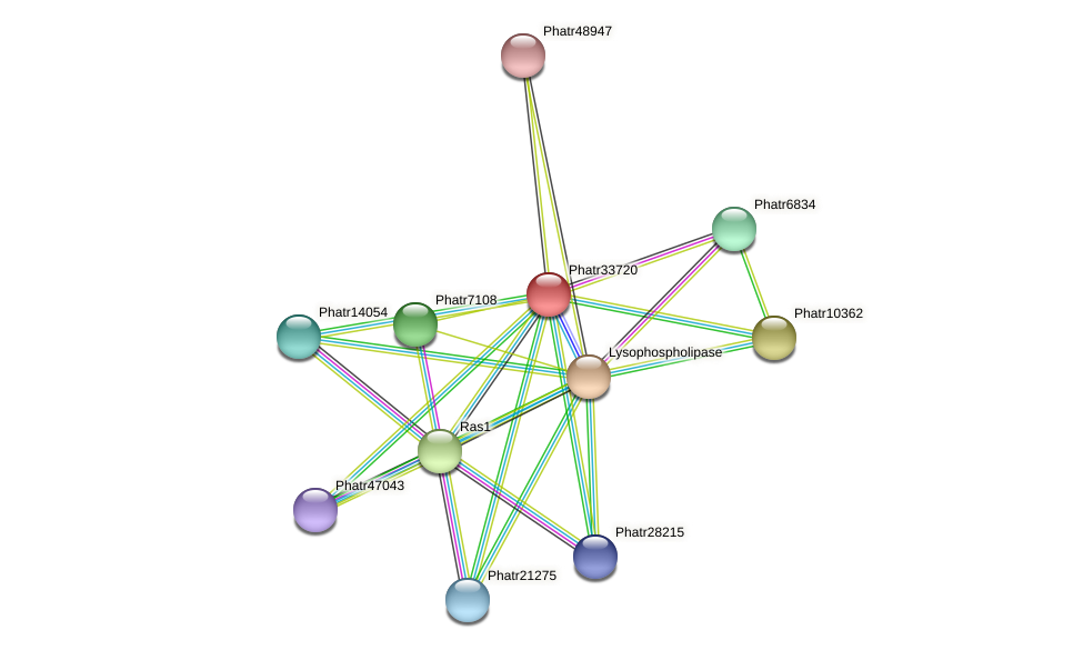 Phatr33720 protein (Phaeodactylum tricornutum) - STRING interaction network