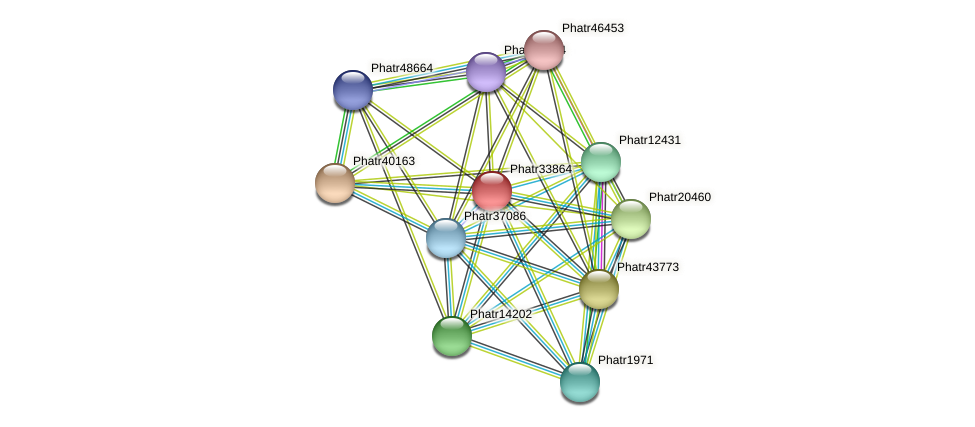 Phatr33864 protein (Phaeodactylum tricornutum) - STRING interaction network
