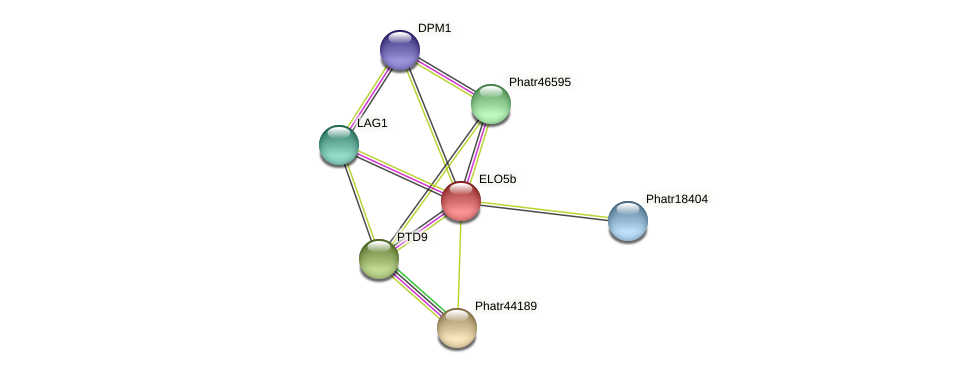 ELO5b protein (Phaeodactylum tricornutum) - STRING interaction network