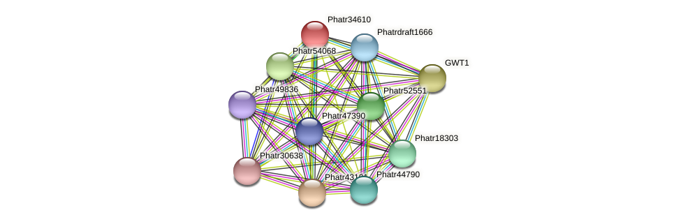 Phatr34610 protein (Phaeodactylum tricornutum) - STRING interaction network