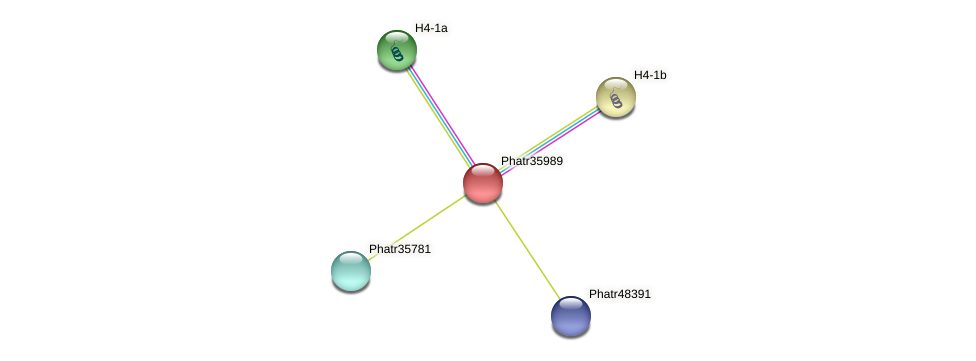 Phatr35989 protein (Phaeodactylum tricornutum) - STRING interaction network