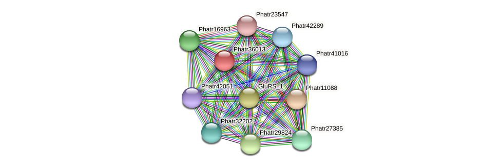 Phatr36013 protein (Phaeodactylum tricornutum) - STRING interaction network