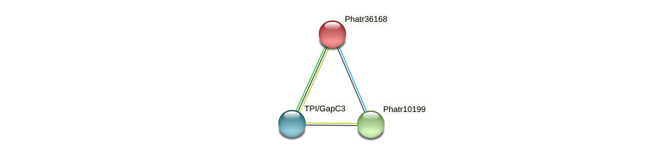 Phatr36168 protein (Phaeodactylum tricornutum) - STRING interaction network