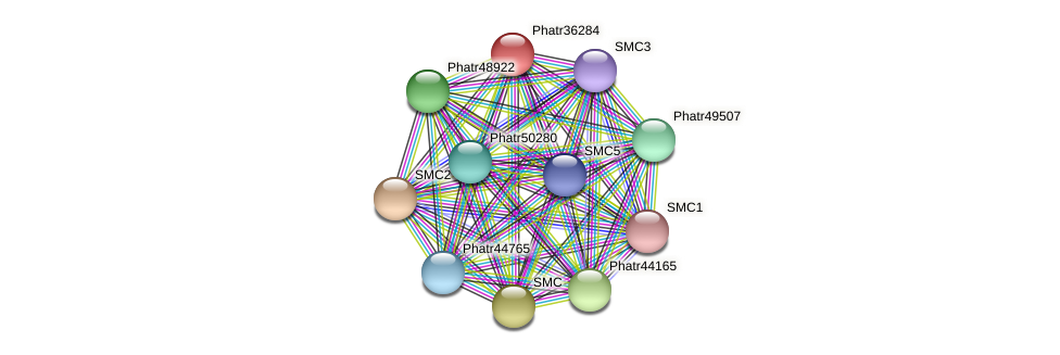 Phatr36284 protein (Phaeodactylum tricornutum) - STRING interaction network