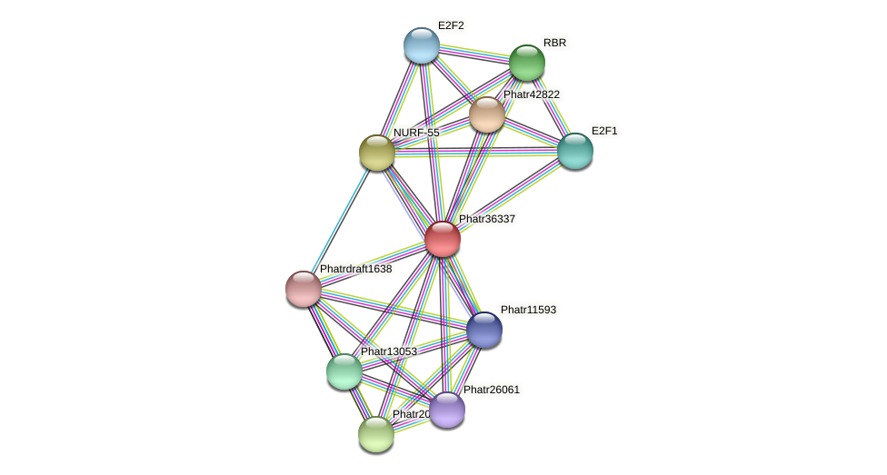Phatr36337 protein (Phaeodactylum tricornutum) - STRING interaction network