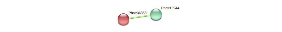Phatr36358 protein (Phaeodactylum tricornutum) - STRING interaction network