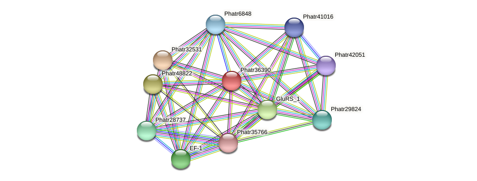 Phatr36390 protein (Phaeodactylum tricornutum) - STRING interaction network
