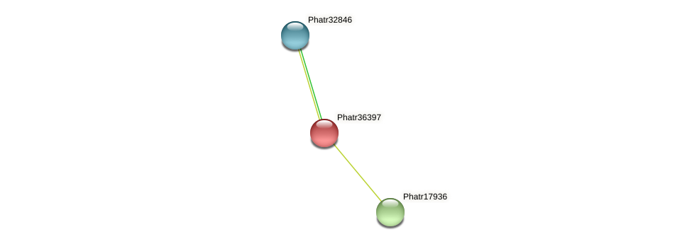 Phatr36397 protein (Phaeodactylum tricornutum) - STRING interaction network