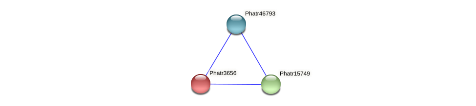Phatr3656 protein (Phaeodactylum tricornutum) - STRING interaction network