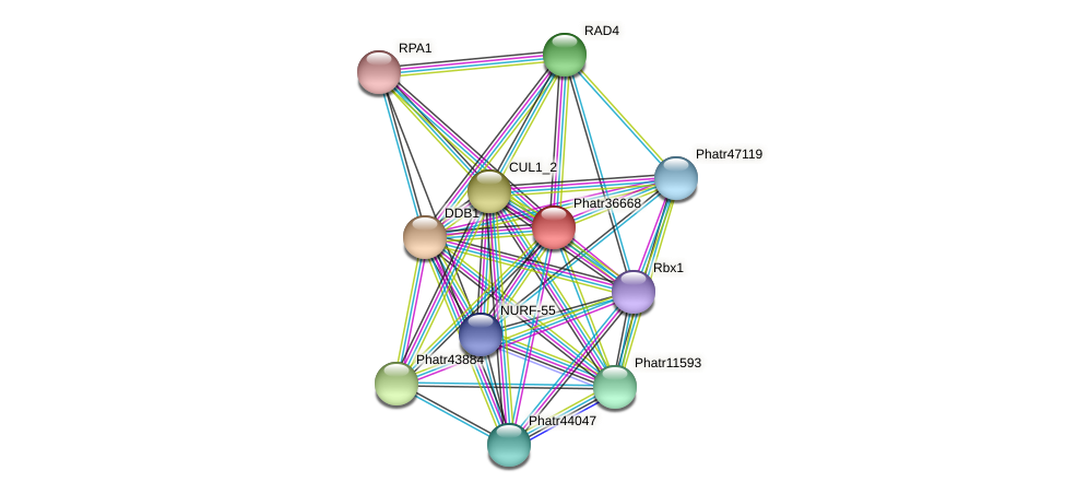 Phatr36668 protein (Phaeodactylum tricornutum) - STRING interaction network