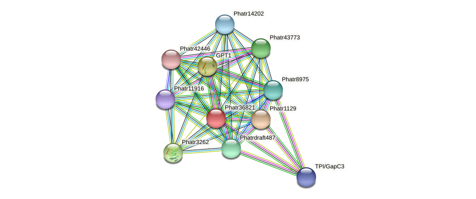 Phatr36821 protein (Phaeodactylum tricornutum) - STRING interaction network
