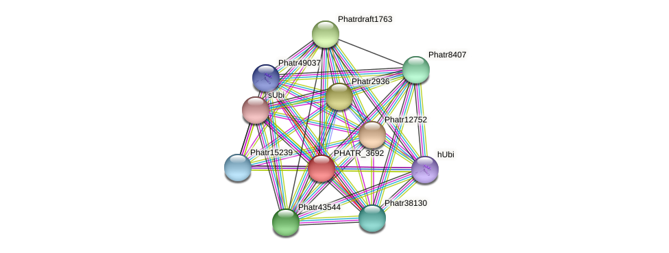 PHATR_3692 protein (Phaeodactylum tricornutum) - STRING interaction network
