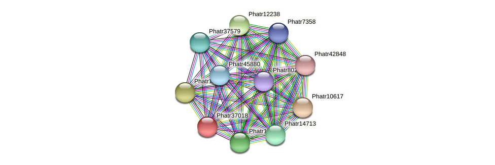 Phatr37018 protein (Phaeodactylum tricornutum) - STRING interaction network