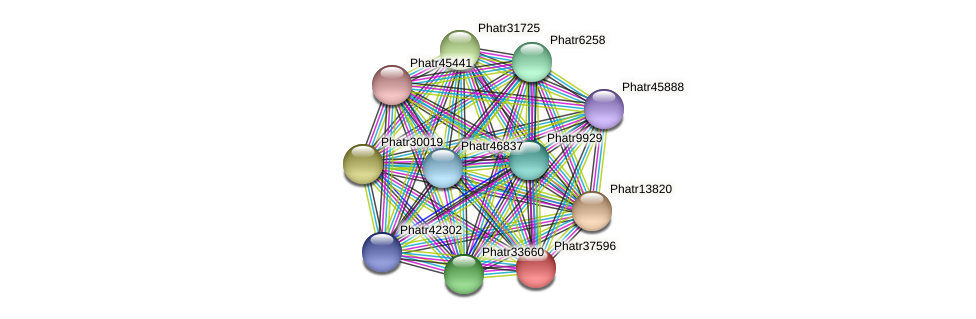 Phatr37596 protein (Phaeodactylum tricornutum) - STRING interaction network
