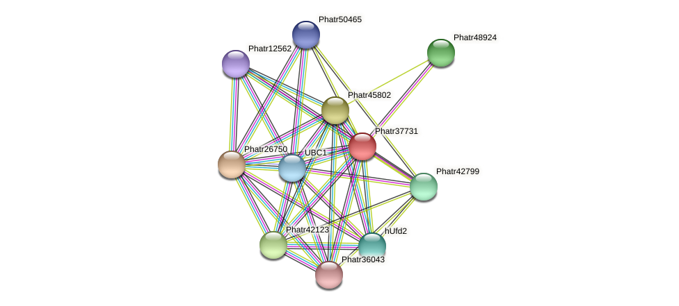 Phatr37731 protein (Phaeodactylum tricornutum) - STRING interaction network