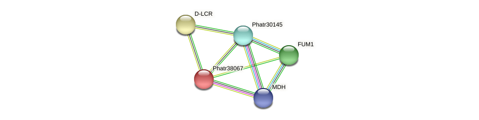 Phatr38067 protein (Phaeodactylum tricornutum) - STRING interaction network