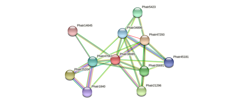 Phatr38085 protein (Phaeodactylum tricornutum) - STRING interaction network