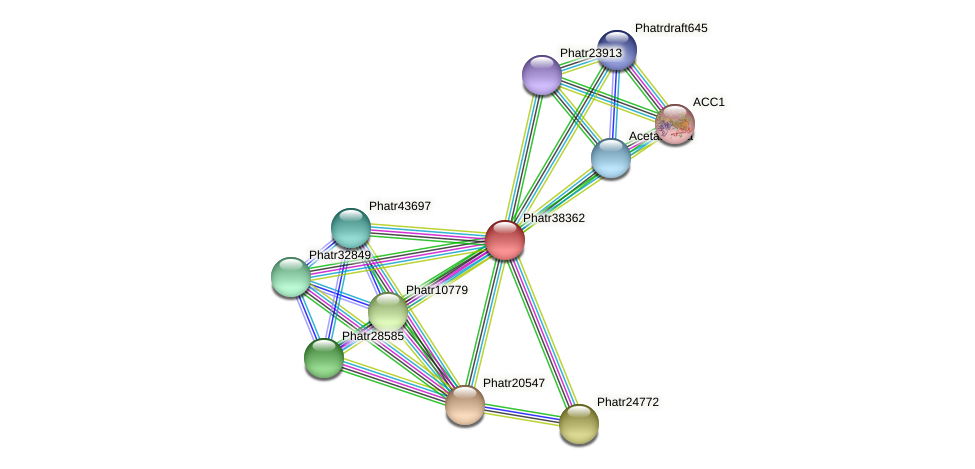 Phatr38362 protein (Phaeodactylum tricornutum) - STRING interaction network