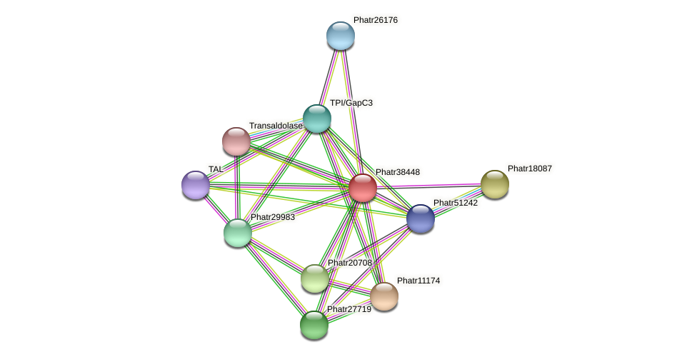 Phatr38448 protein (Phaeodactylum tricornutum) - STRING interaction network