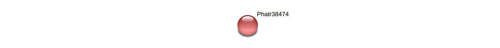 Phatr38474 protein (Phaeodactylum tricornutum) - STRING interaction network