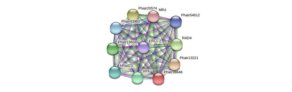 Phatr38848 protein (Phaeodactylum tricornutum) - STRING interaction network