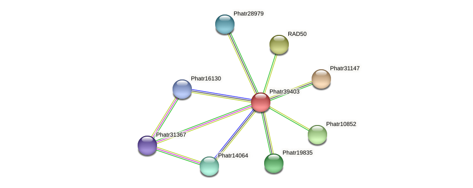 Phatr39403 protein (Phaeodactylum tricornutum) - STRING interaction network