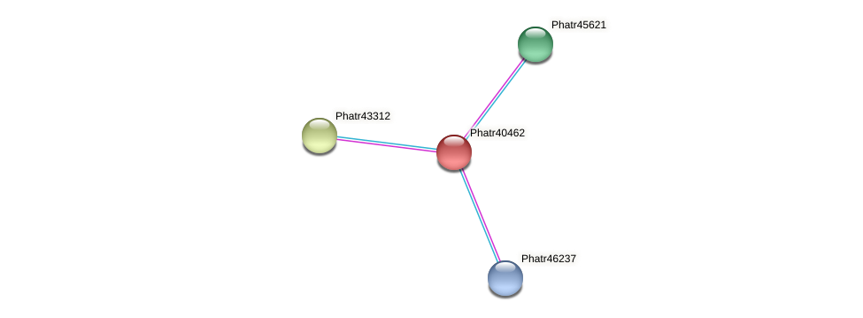 Phatr40462 protein (Phaeodactylum tricornutum) - STRING interaction network