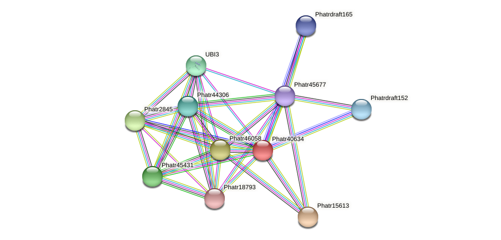 Phatr40634 protein (Phaeodactylum tricornutum) - STRING interaction network