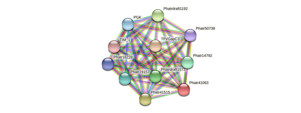 Phatr41063 protein (Phaeodactylum tricornutum) - STRING interaction network