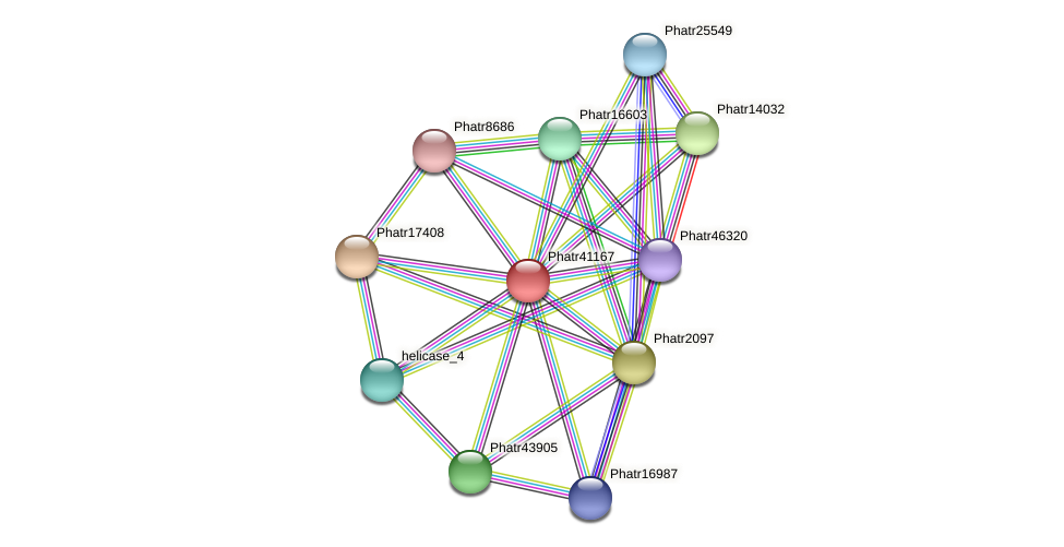 Phatr41167 protein (Phaeodactylum tricornutum) - STRING interaction network